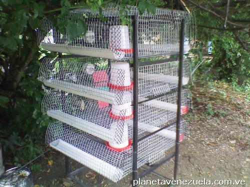 Fotos de se vende jaula para cr a de pollos en guanare for Jaulas para cria de peces